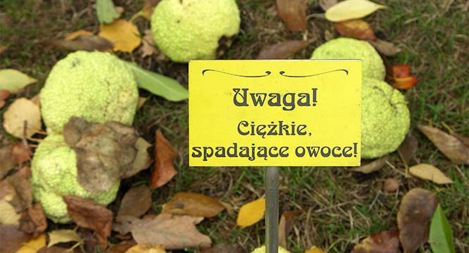 Woazie piękna ispokoju weWrocławiu